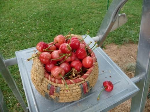 Printemps- Première récolte-mai