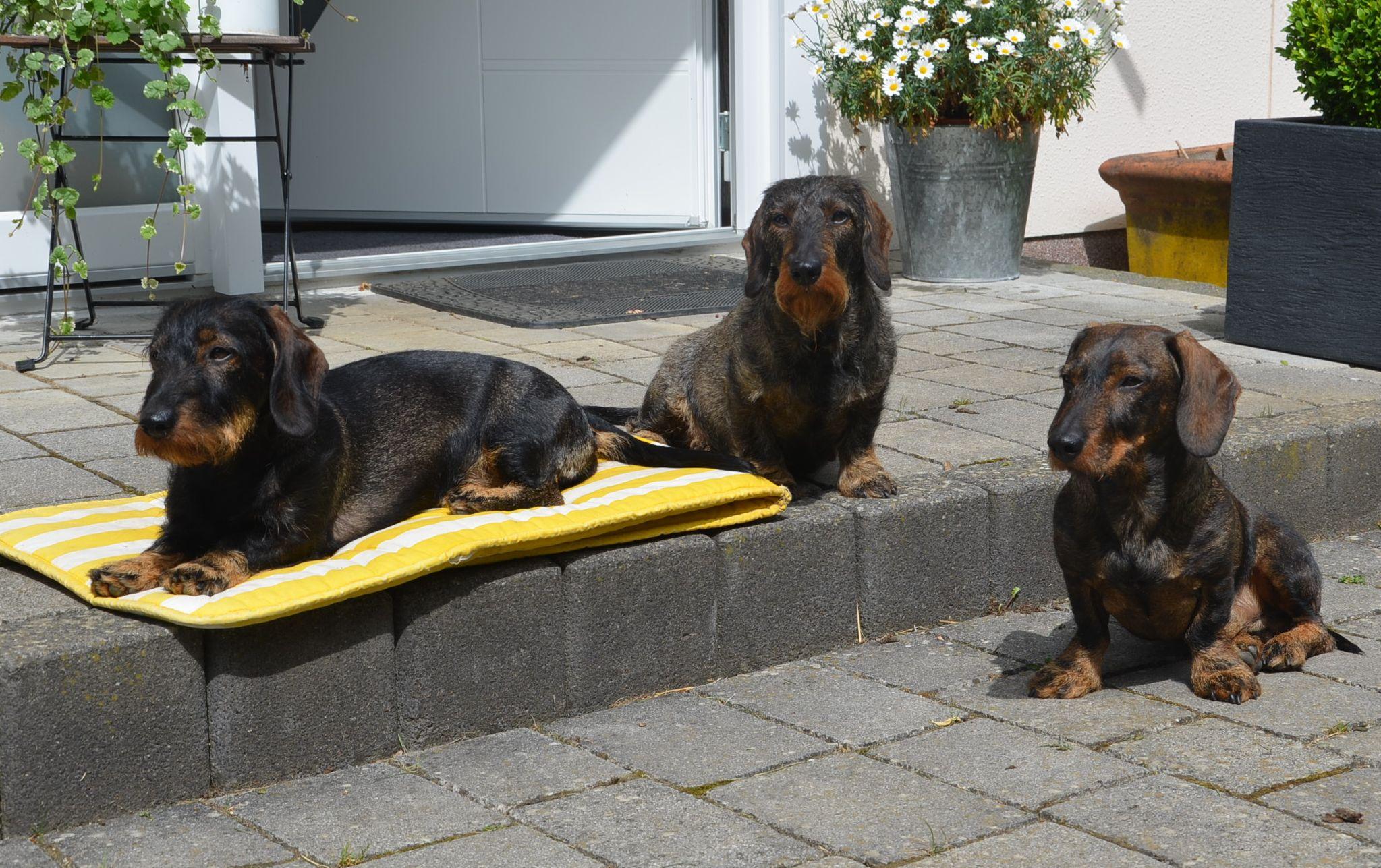 Amira, Venja und Bendix genießen die warme Juni-Sonne