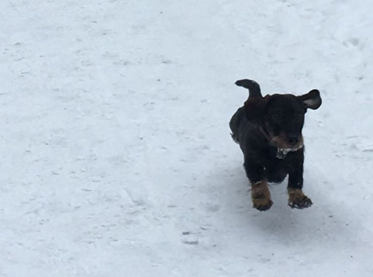 Schnee-Flug-Hund