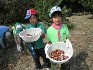東国吉遊育の森 栗がたくさん取れました