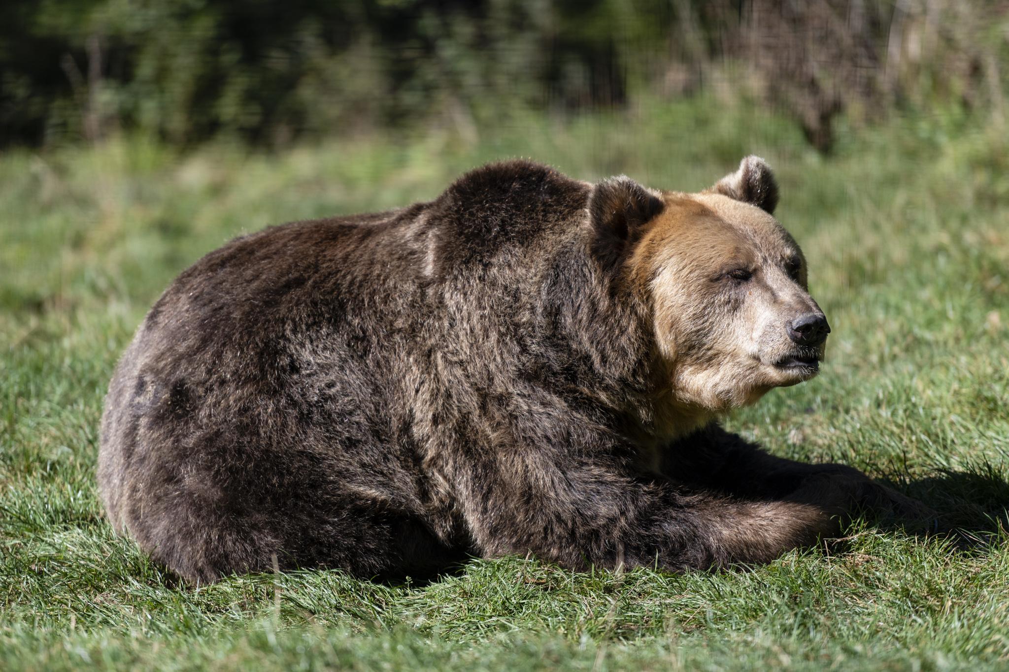 Bärenreservat