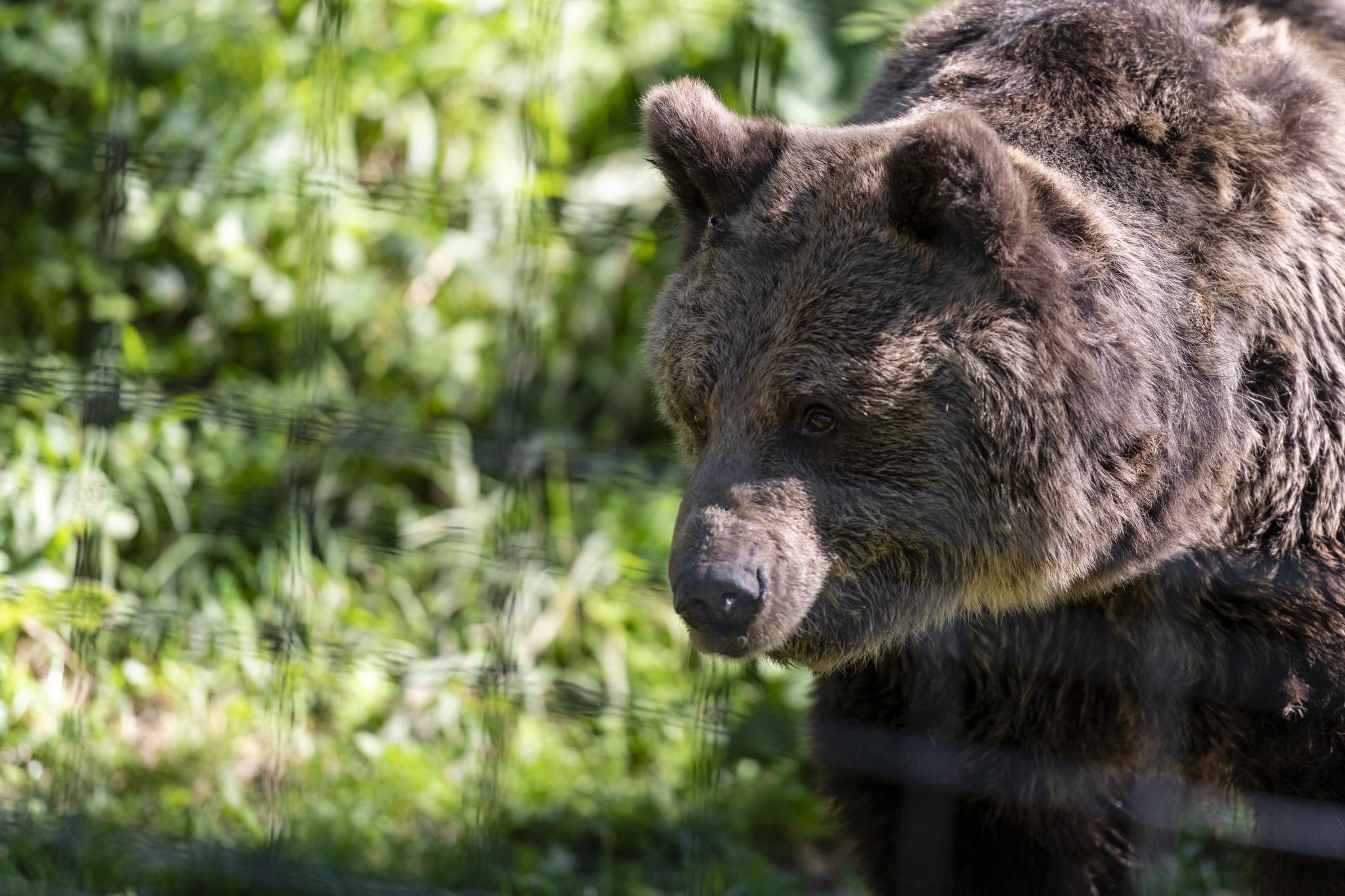 Braunbärenreservat bei Zărnești / Rumänien Reisebericht