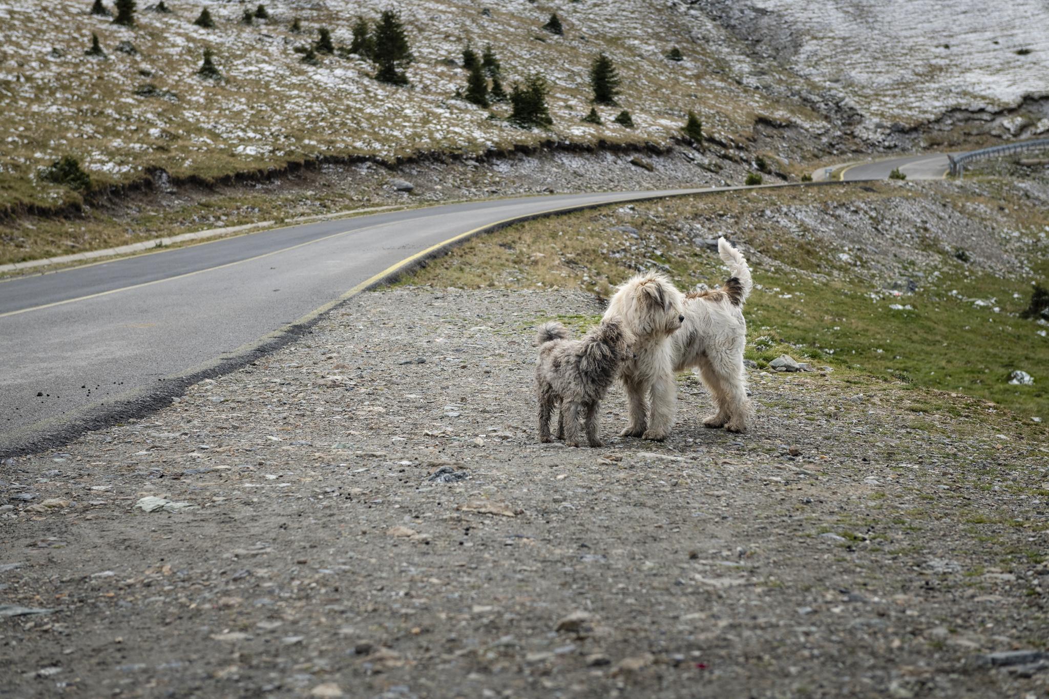 Transalpina / Rumänien Reisebericht