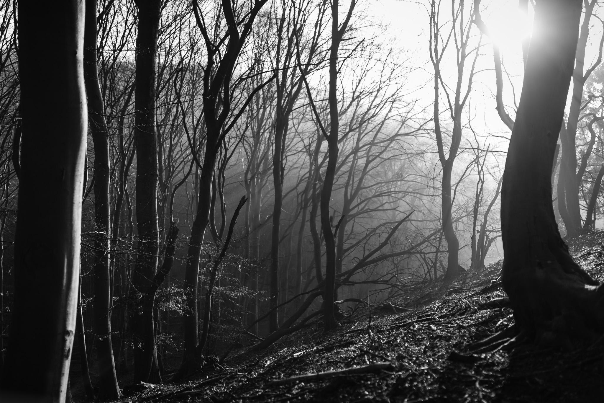 Mystische Waldstimmung - Iso31 /f1,4 / 1/800 Sekunden