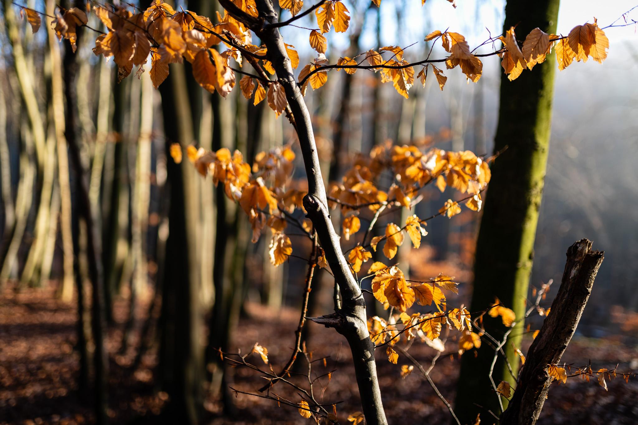 Herbstlicht - Iso31 /f1,4 / 1/250 Sekunden