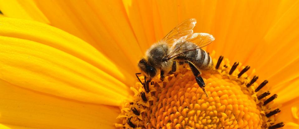 Crea una bolla aroma-terapica sgradita agli insetti molesti! <br>Eco-compatibile con i prodotti naturali.