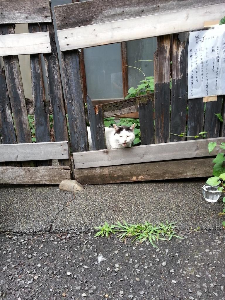 今日も専用出入口からおはようにゃん! 【2014年6月28日】