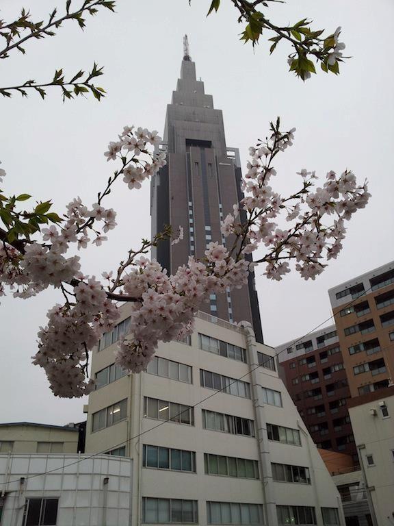 ドコモさくら、八分咲き。満開はまだのやう。 【2013年3月25日】