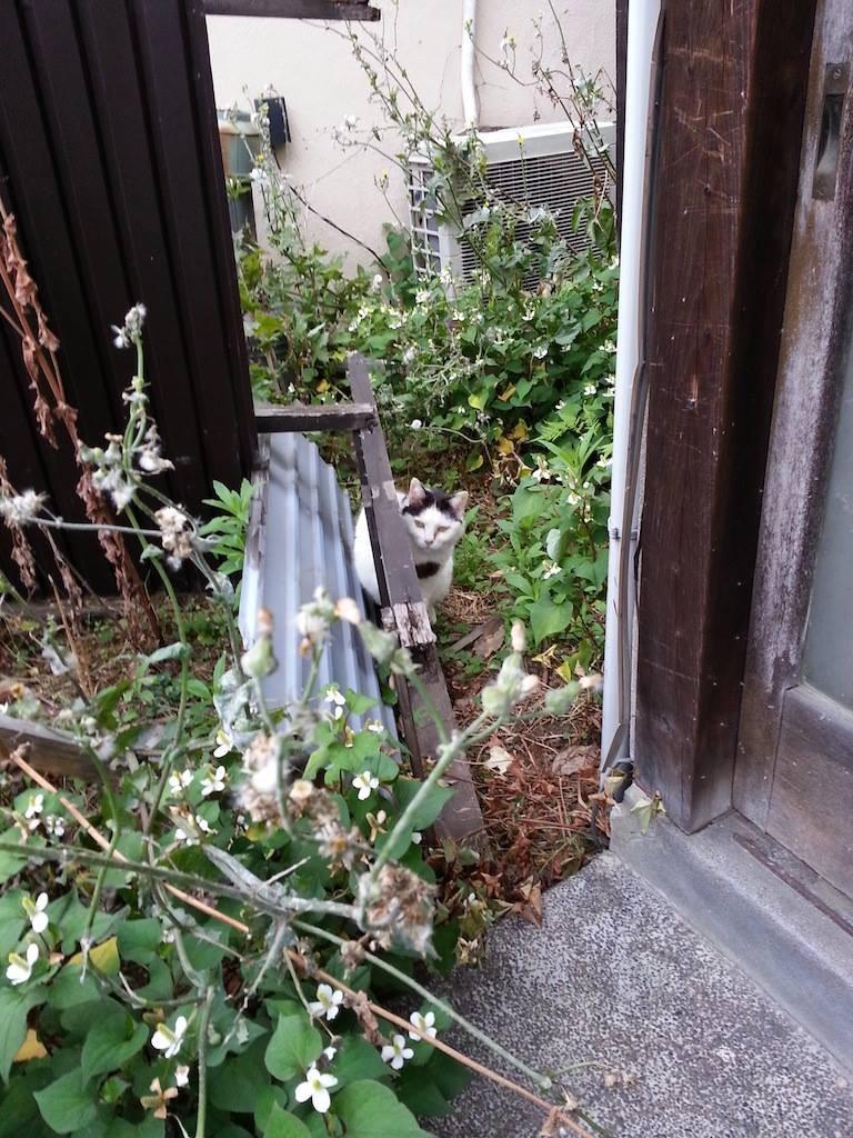 玄関脇から、おはようにゃん! 【2014年6月3日】