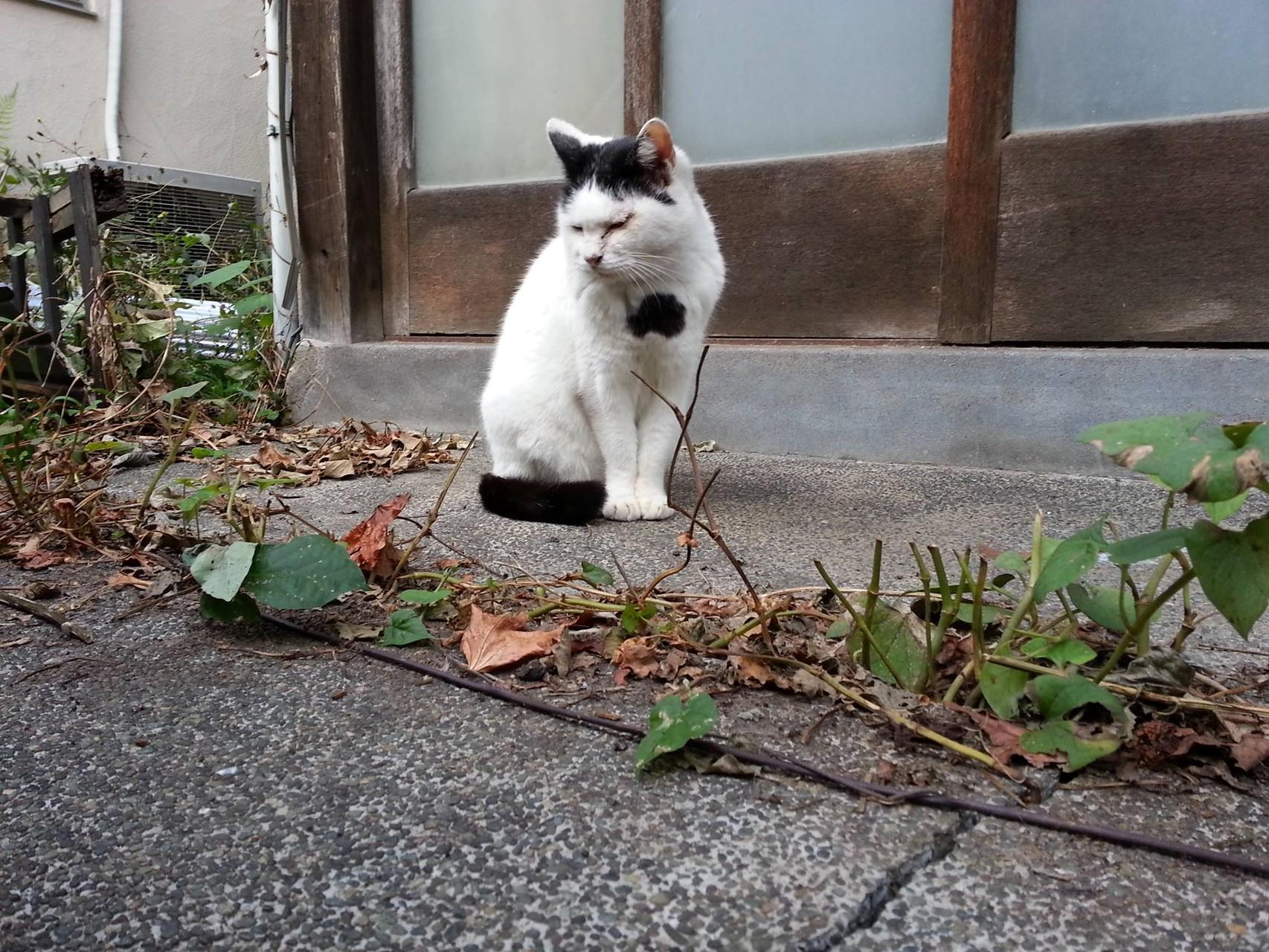 もうすぐ木枯らし吹く季節になるとです。心も寒くなるとです。ぬこ田です、ぬこ田です、ぬこ田です...。 【2014年10月26日】