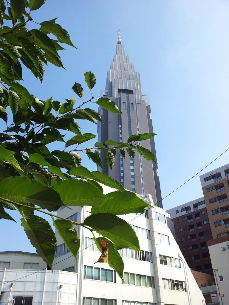 今日も猛暑日。夕方にはまたゴロゴロ、ザァザァ。 【2013年7月9日】