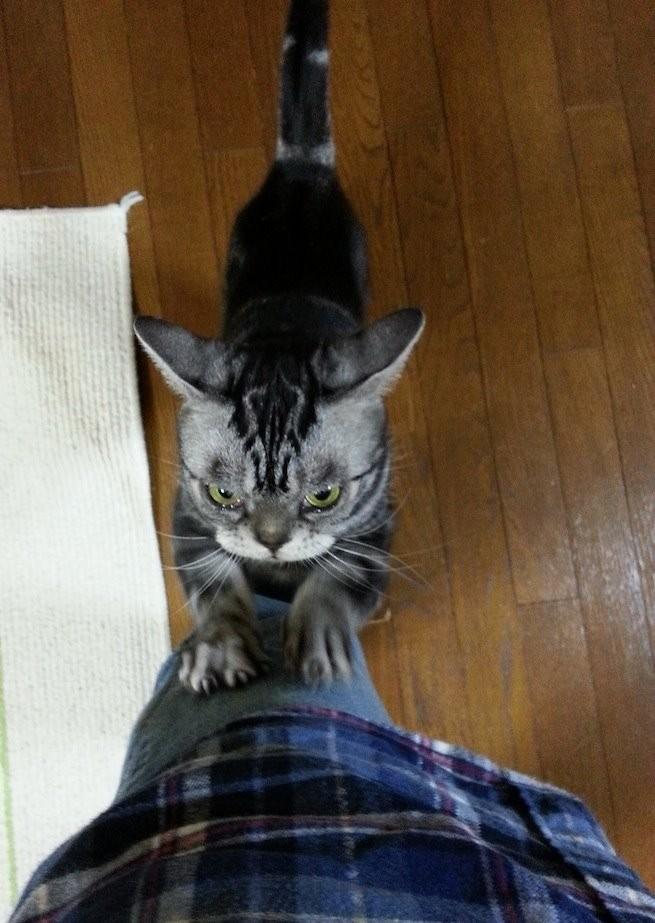 ぬぁ~にぃ~、ぬこ好きの片山ちゃんも誤認逮捕かもだとぉ~ ガリガリガリ… 【2014年3月5日】