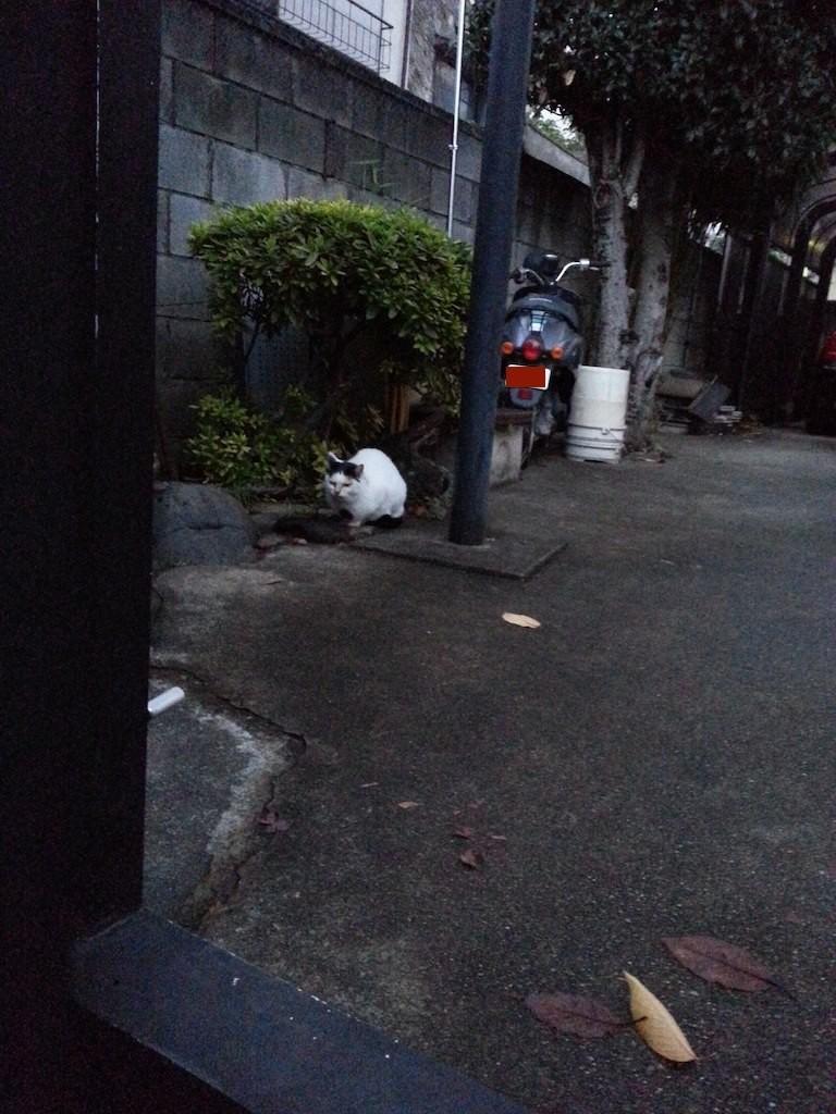 おはようにゃん! 久しぶりの朝ぬこ田さん。 【2014年12月5日】