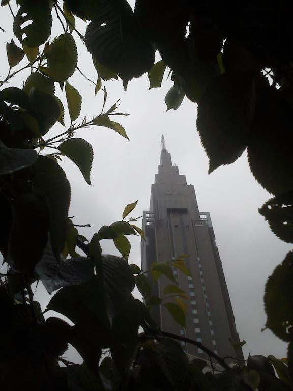 雨ぇ~! 日増しに葉っぱが大きくなっていまつ。 【2012年5月2日】