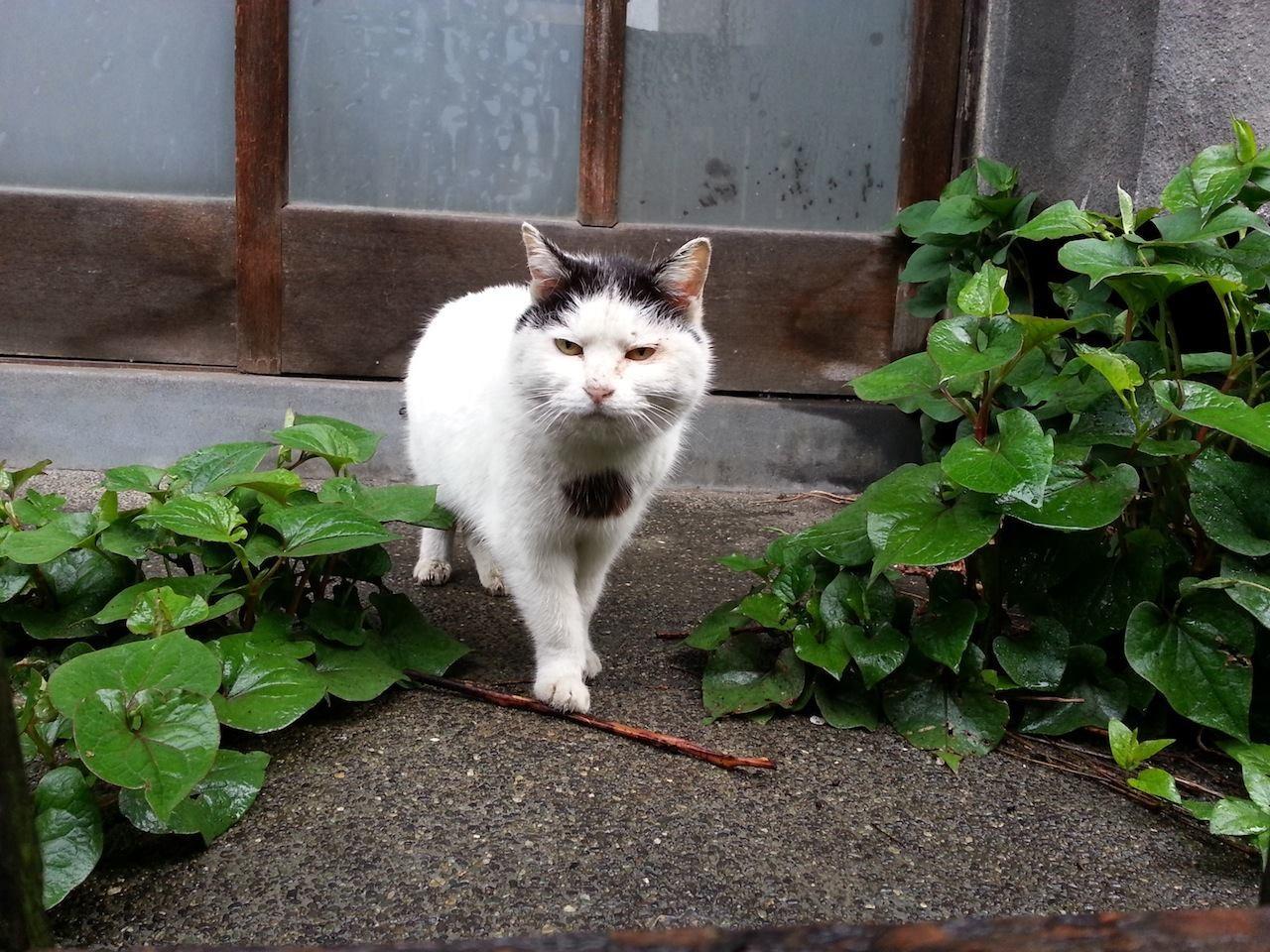 吾輩は、ぬこ田健作である。玉はまだ無い...うふっ♡ 【2014年5月1日】
