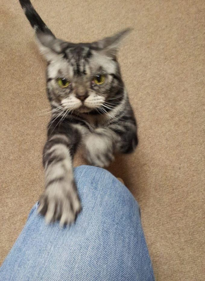 今日はイスに座っているおでの足にガリガリガリ。 【2013年11月27日】