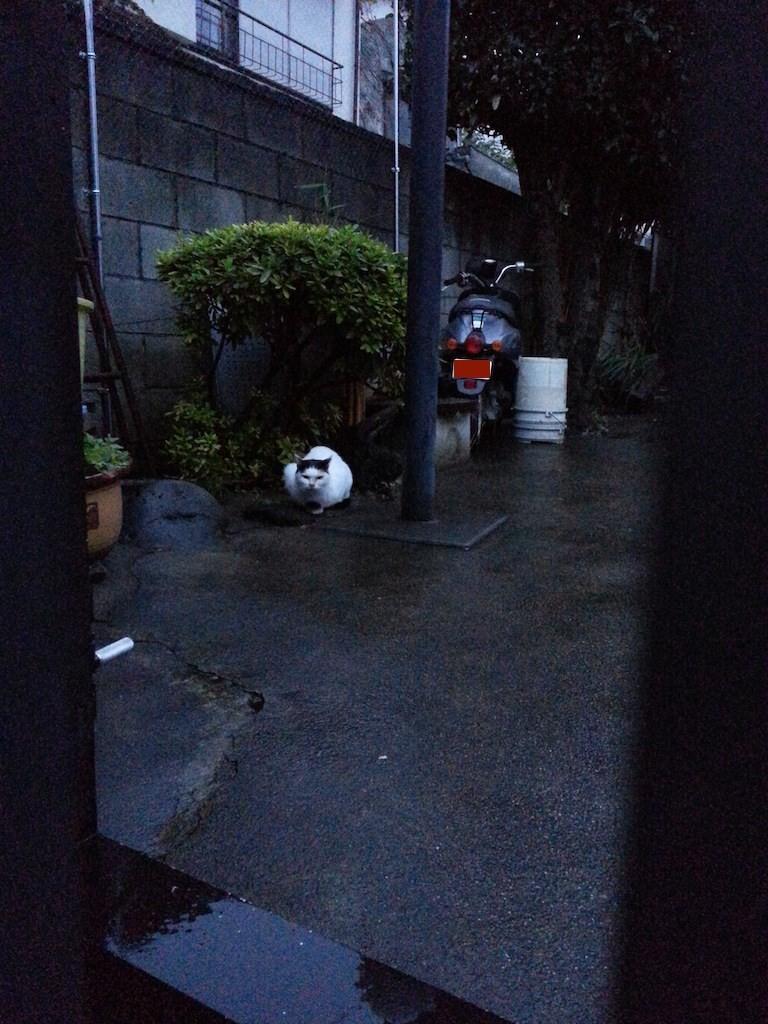 おはようにゃん! ぬこ田も走る師走だにゃ。 【2014年12月1日】