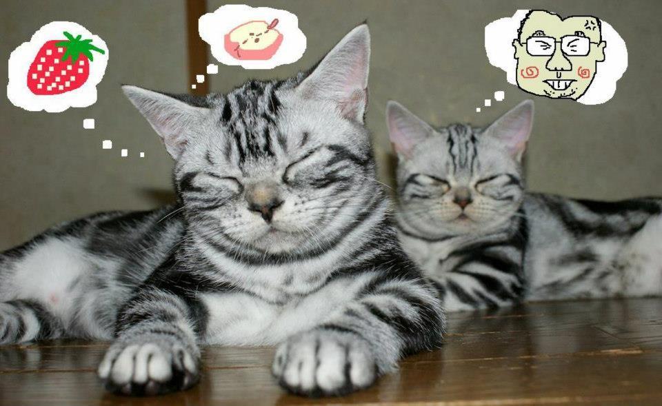 寅とさくらの Sweet Dreams とは? (*´∀`*)   http://catasters.tumblr.com/post/16878324864/sweet-dreams 【制作日/2012年3月15日】
