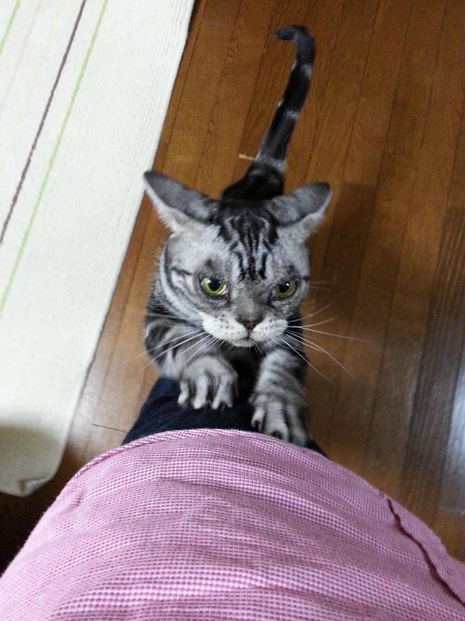 うちわ辞任に子供服辞任…あ~あっガリガリ… 【2014年10月20日】