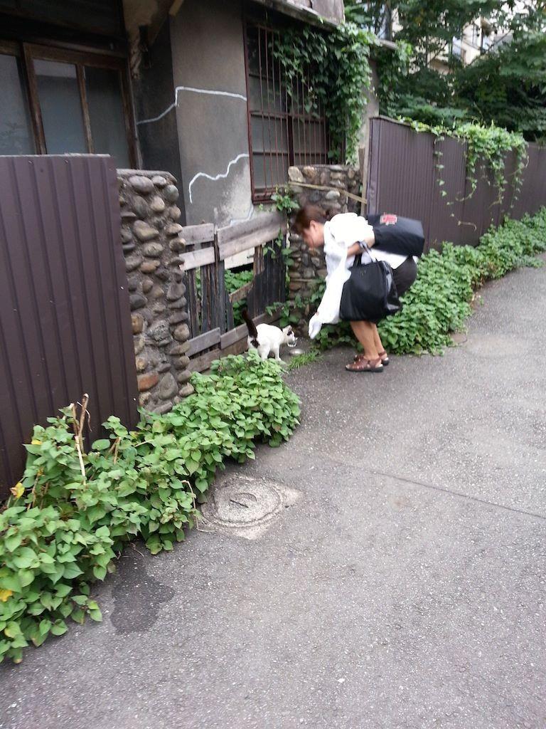 地域ぬこ田さんにご飯をあげる地域おばさん。 【2014年7月14日】