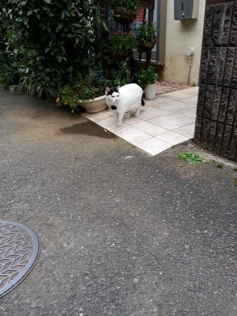 新居から、こんにゃちにゃ! 【2014年11月17日】