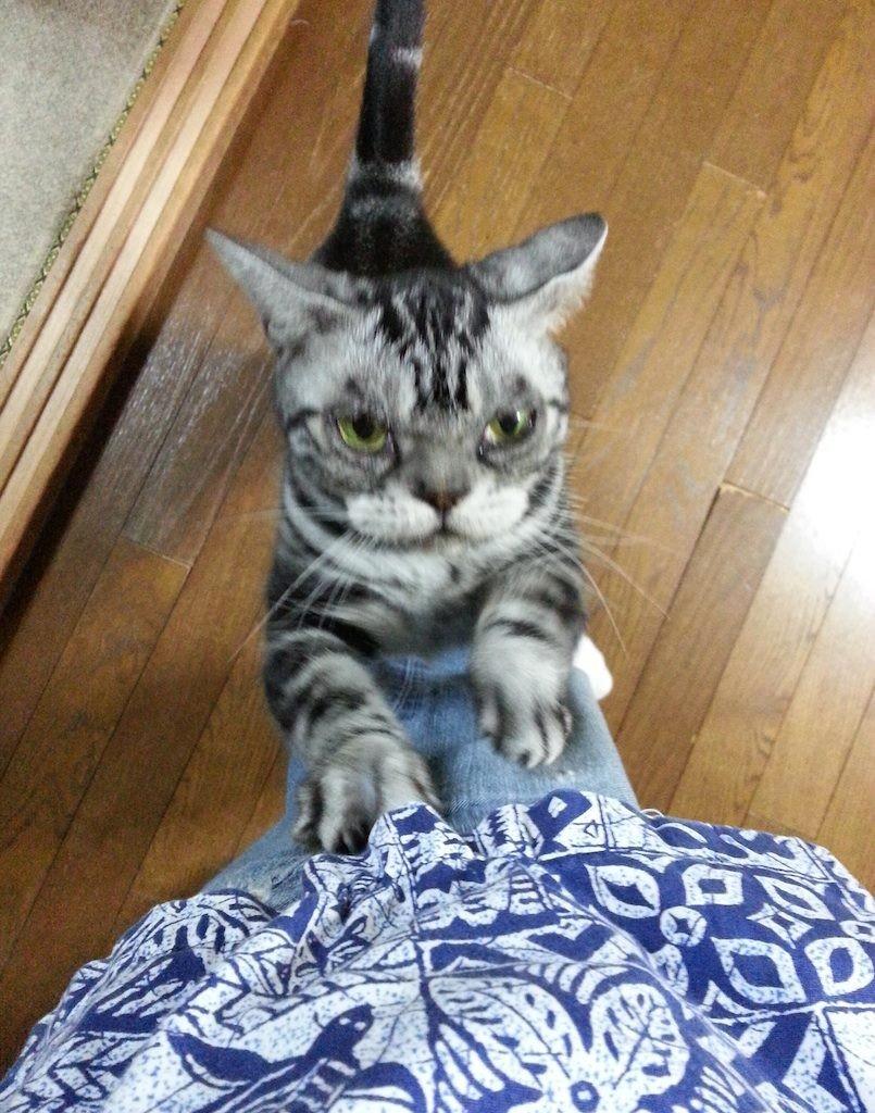 三連覇、おめでにゃ~ガリガリガリ... 【2014年9月26日】