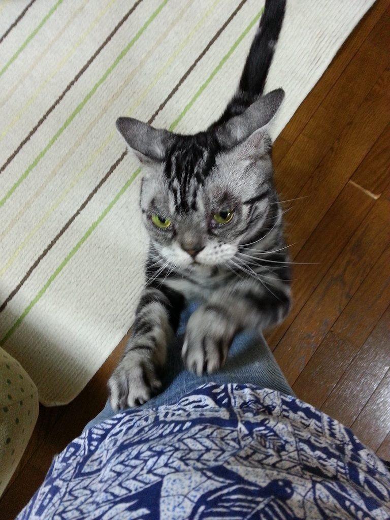 宇都宮の大雨、ぱにゃいな…ガリガリガリ… 【2014年6月16日】