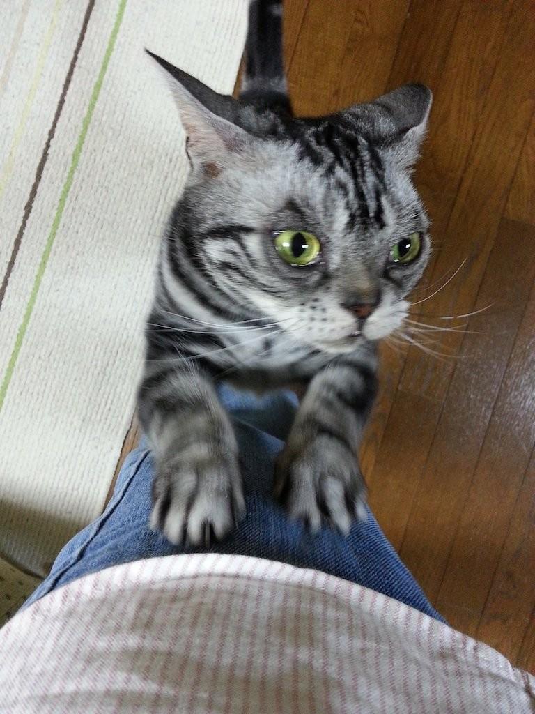 えっ! きょ、きょ、巨人5連敗?…ガリガリ 【2014年5月16日】