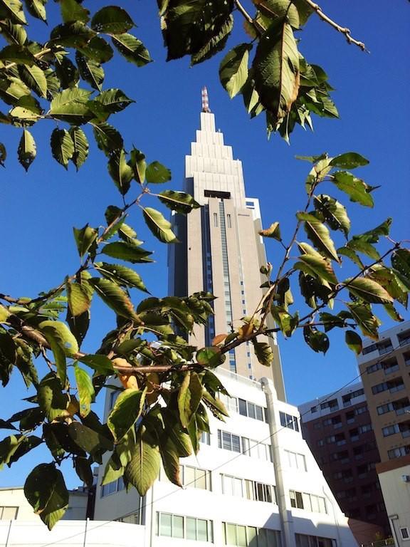 春の青さとは違う空の色でつね。(´∀`*)ノビュチィフォ! 【2012年11月2日】