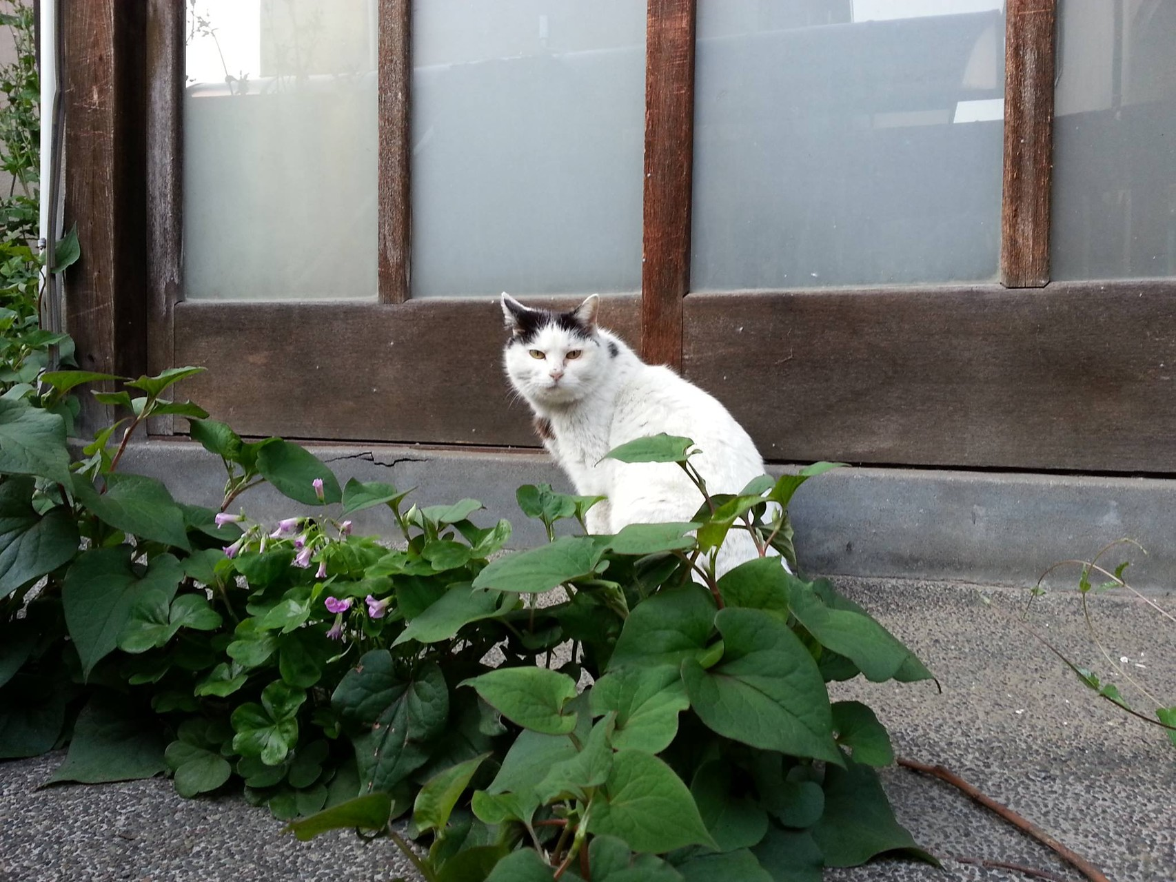 夕焼け健ちゃん天気予報。にゃすはにゃれ! 【2014年5月7日】