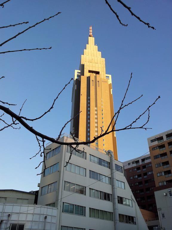 シドニーとの最高気温差28度だよ、きくちゃん! 【2013年1月11日】