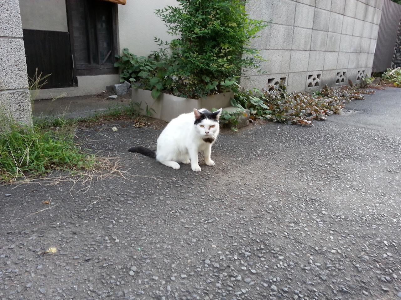 よっ、おはようにゃん! 日本には依存症の疑いがある人が、536万人もいるらすいが、おでは『ぬこ田依存』かなぁ? 【2014年8月22日】