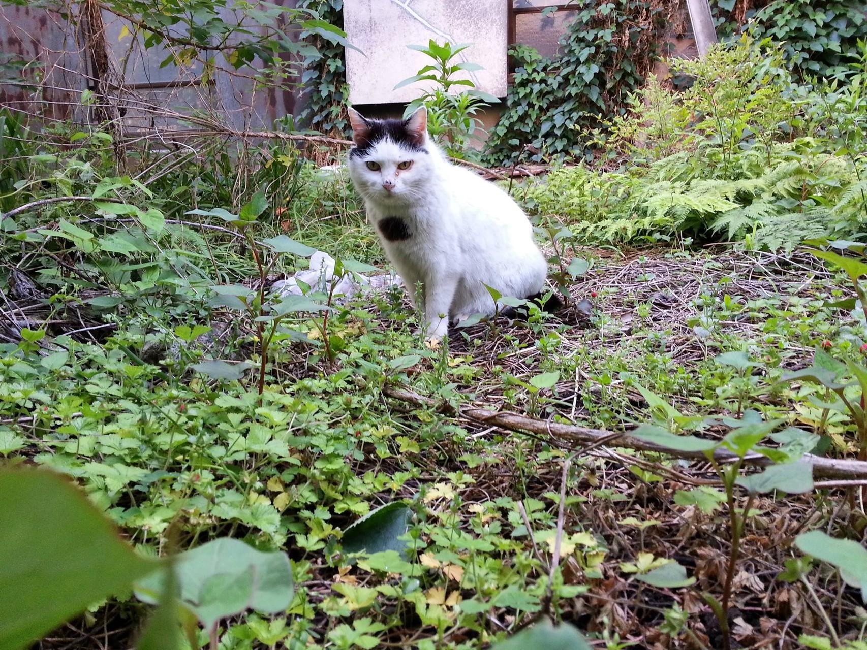 雨上がりのお庭から、おつかれにゃん! 【2014年5月13日】