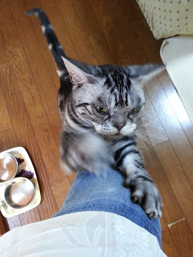 巨人、弱っちぃなぁ~さめざめ、ガリガリ... 【2014年8月19日】
