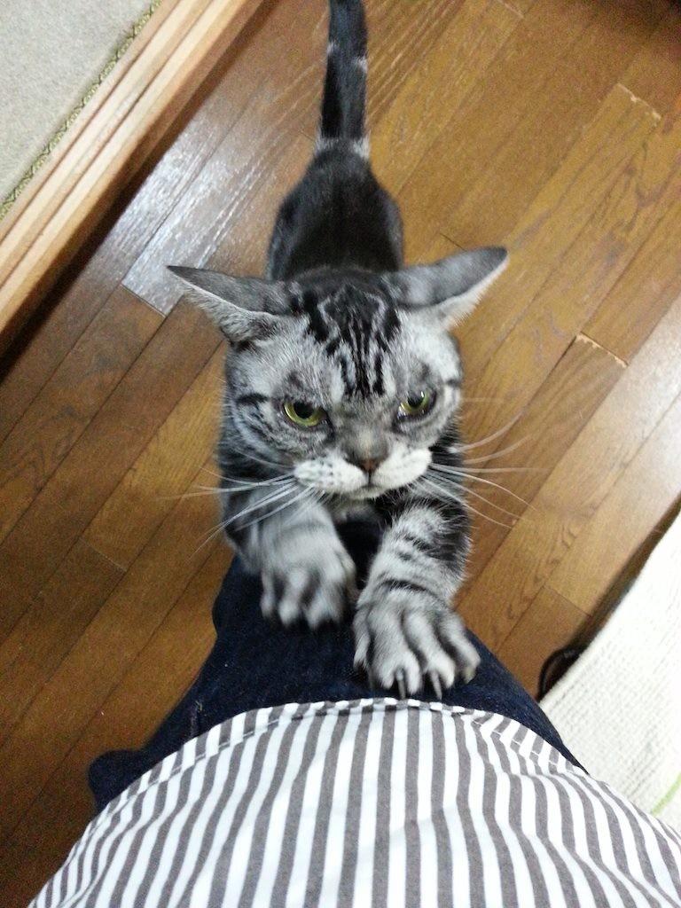 石原慎太郎くん、ご苦労様ですた!...ガリガリ 【2014年12月16日】