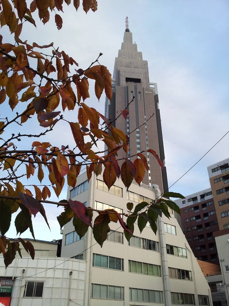 代々木の桜の葉も紅葉真っ盛りでつよ、奥さん! 【2013年11月28日】