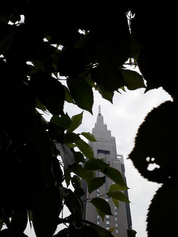 薄曇りドコモくん。じきに葉っぱだらけになるね。 【2012年5月17日】