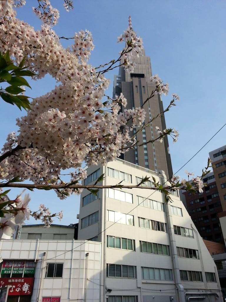 ドコモ桜、満開ちう。週末まで保つのかなぁ? 【2014年4月2日】