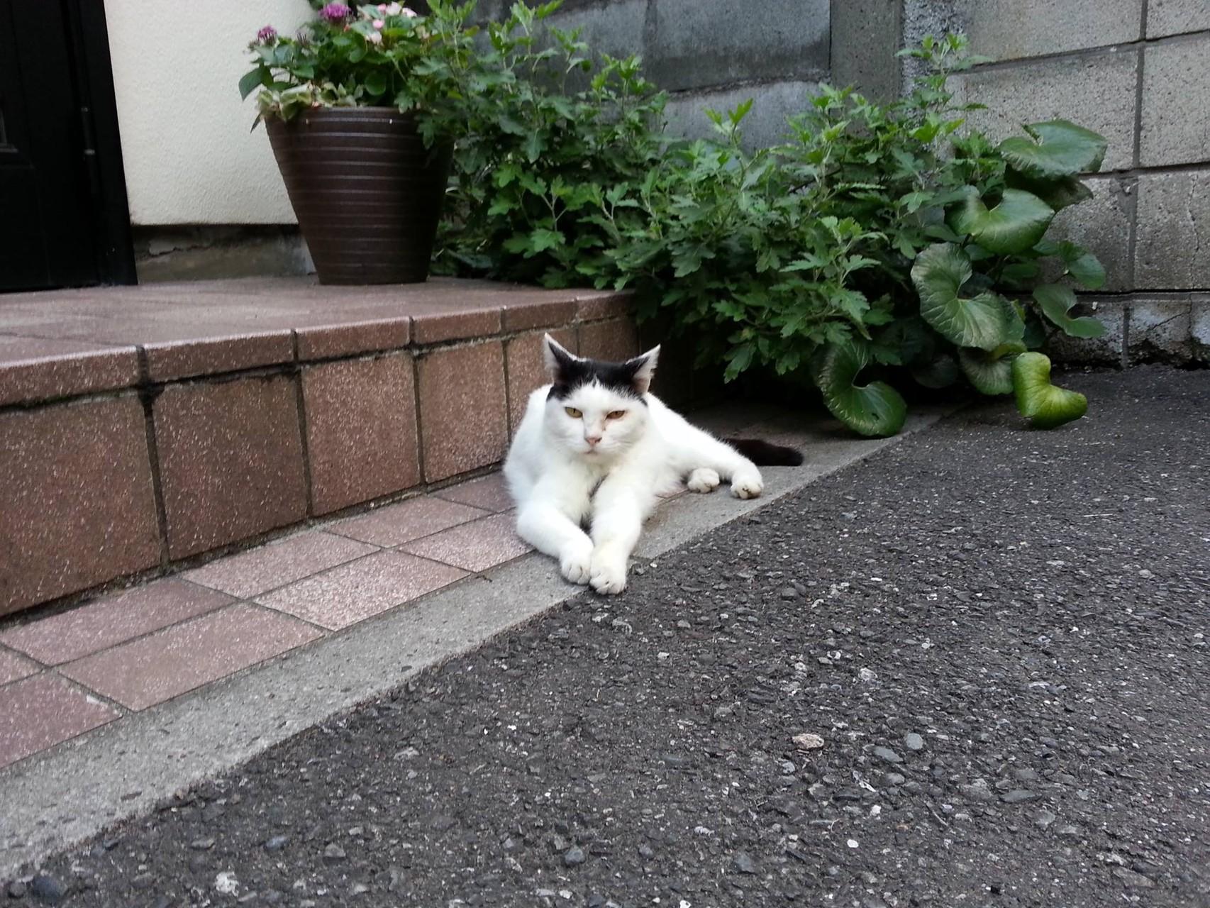 お疲れにゃん。前へ~~にゃらい! 【2014年9月2日】
