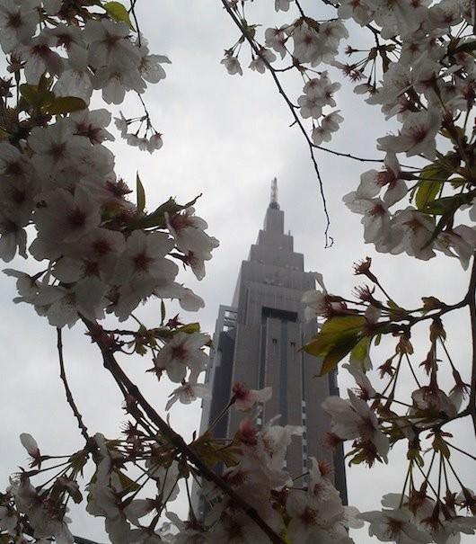 ♪もぉ~終わりぃ~だねぇ♪ 雨模様のドコモ桜。 【2012年4月11日】