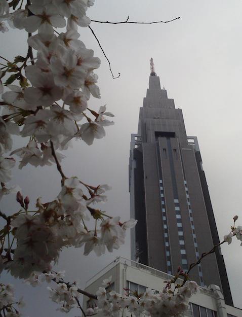 曇天ドコモ桜。 ドコモだけにドニーチョが見頃! http://www.youtube.com/watch?v=q_9853eIL_4 【2012年4月6日】