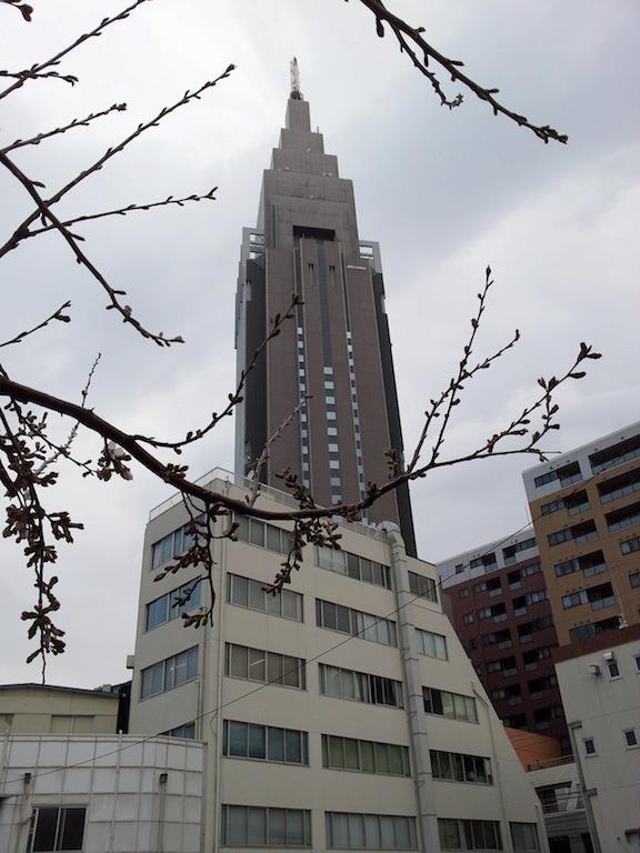 代々木のドコモ桜は一分(一部)咲きだよ、ママ! 【2013年3月18日】