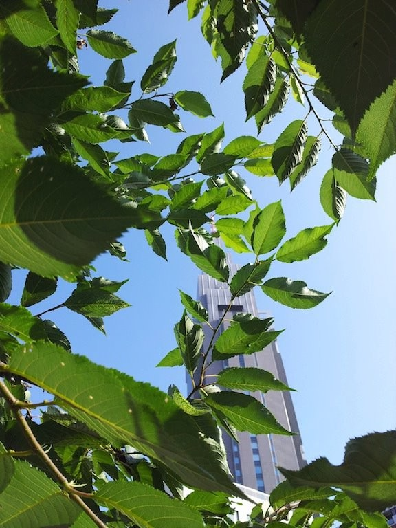 昨日午前中の雨で、葉っぱが成長したようでつね。 【2012年7月9日】