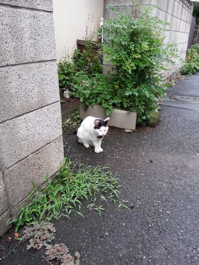 はいはい、おはようにゃん(●ↀωↀ●)✧ 【2014年7月5日】