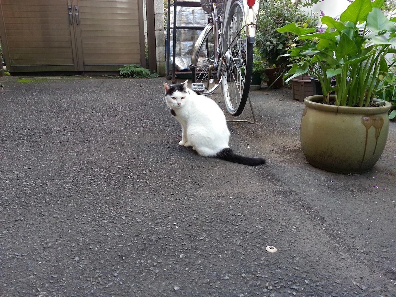 おはようにゃん! 地域のかたから朝食をいただき、食後のぬこ田さんでつよ。 【2014年10月26日】