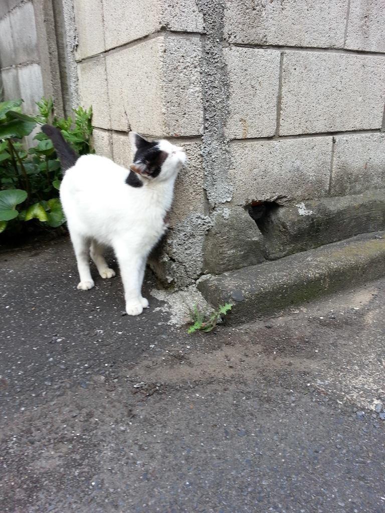 かいいの...スリスリスリ… 【2014年8月14日】