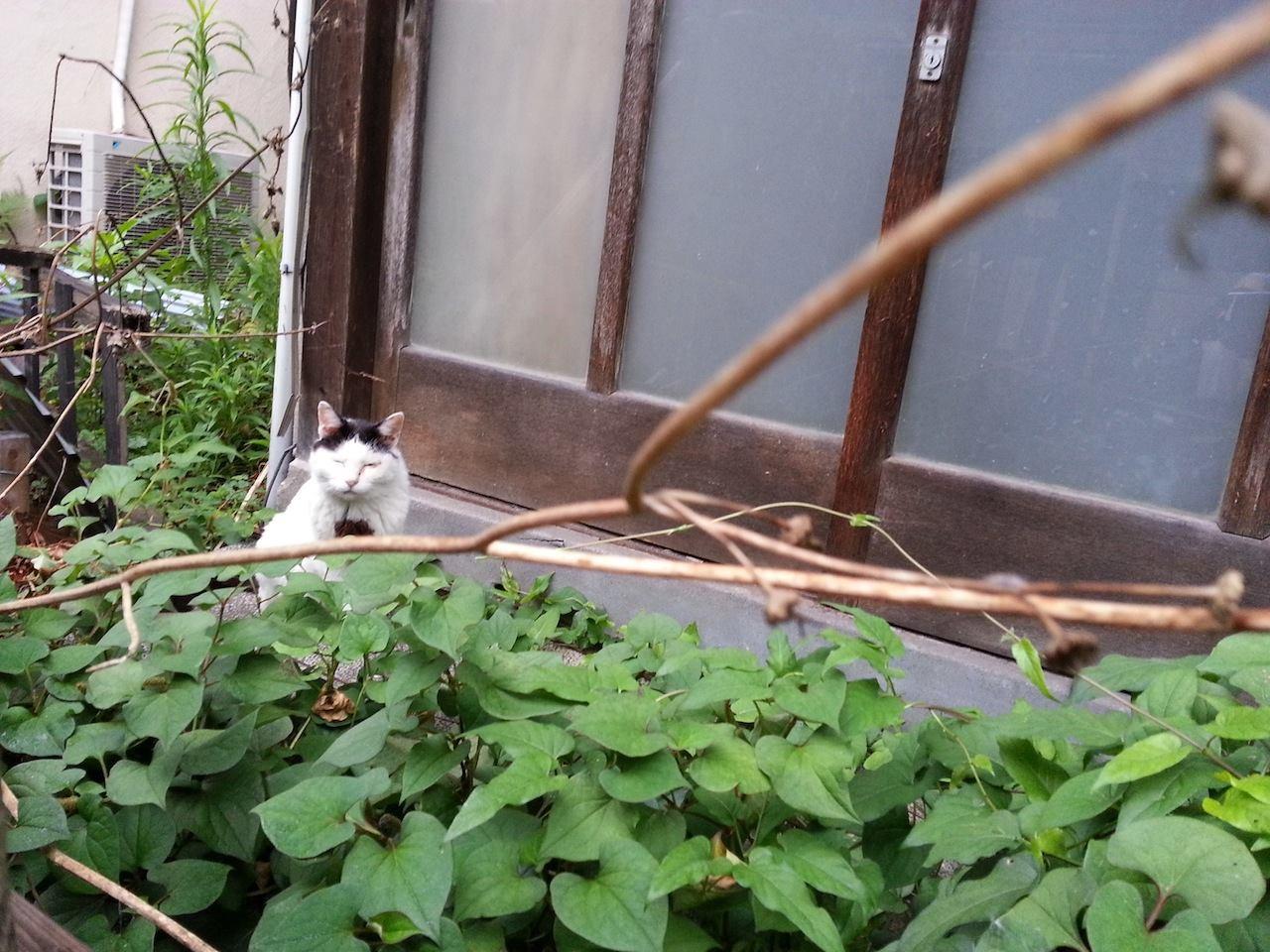 梅雨明け...うふふ♡ 【2014年7月18日】