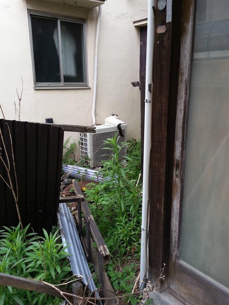 猛暑日からの熱帯夜で、朝からへたれなぬこ田さん、チラっ…おはようにゃん! 【2014年7月15日】