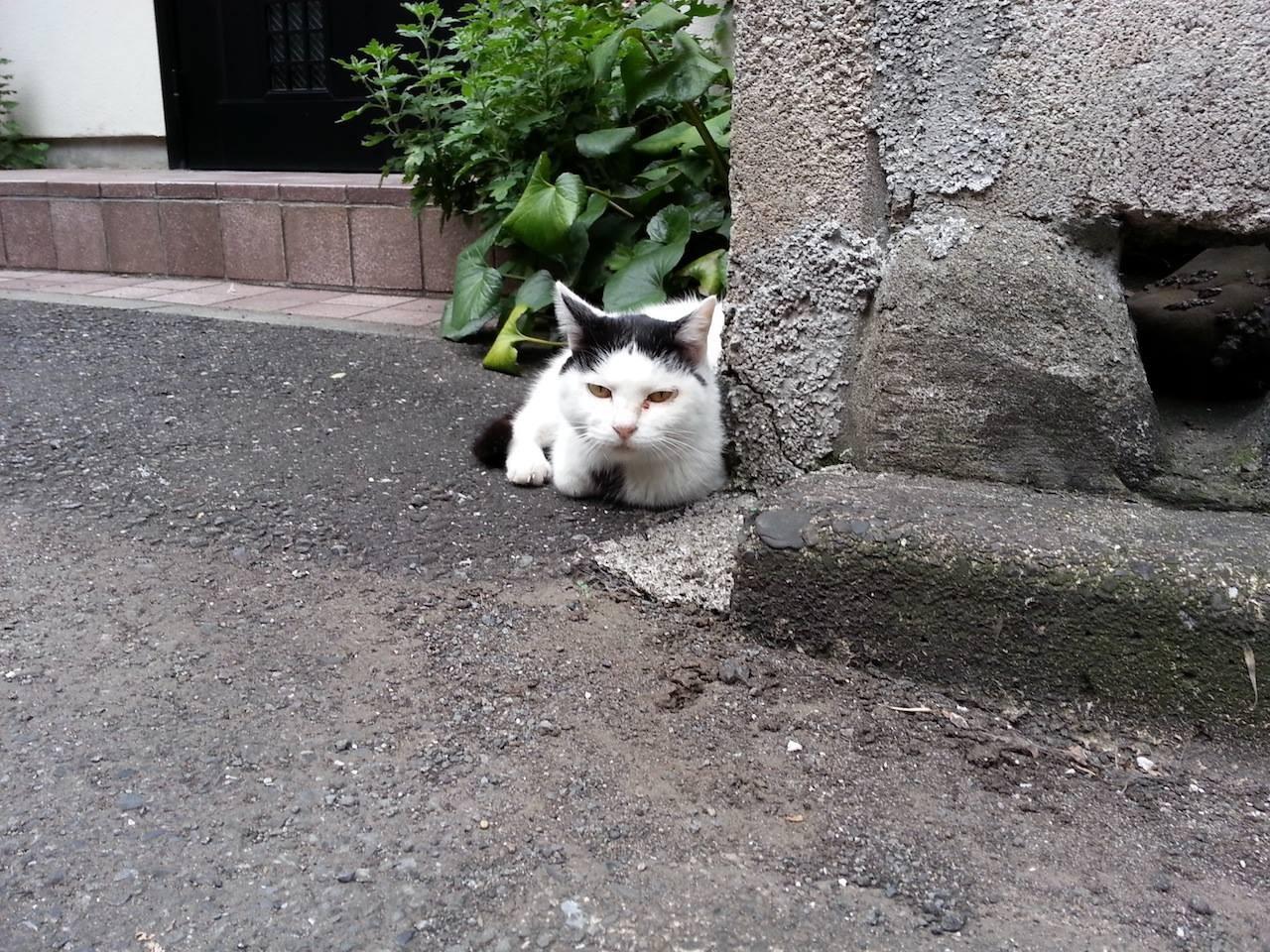 ぬこ田はん、いらはりますた。元気そうどす。 【2014年9月24日】