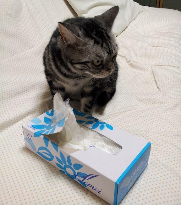 ティッシュの箱も喰らう…恐るべし、寅次郎! 【2012年10月27日】